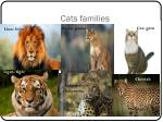 cats families