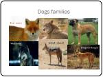 dogs families