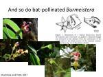 and so do bat pollinated burmeistera