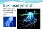 box head jellyfish