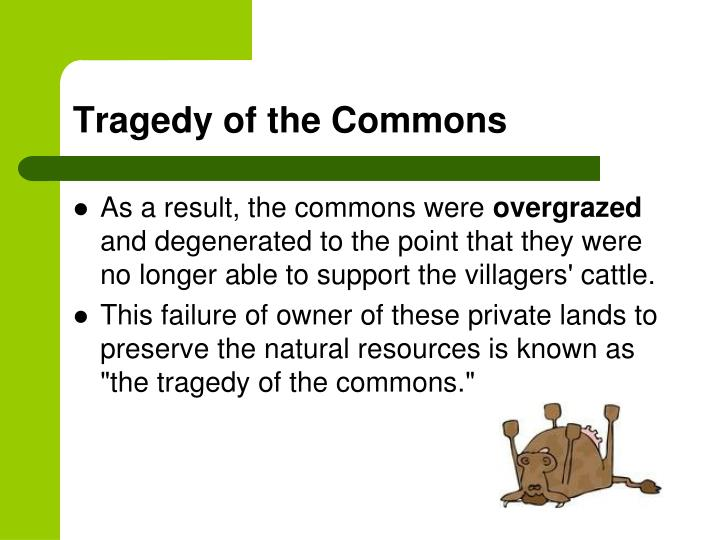 ppt easter island and the lorax essay powerpoint presentation  tragedy of the commons