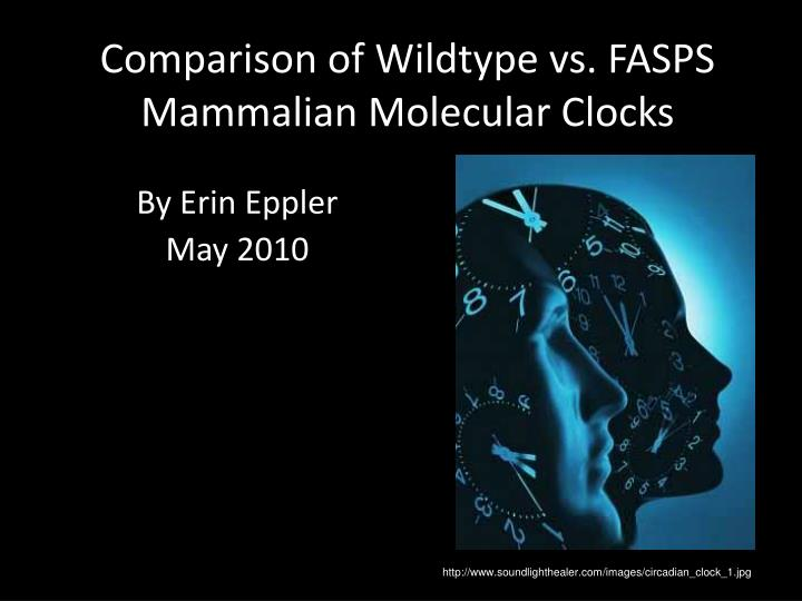 comparison of wildtype vs fasps mammalian molecular clocks n.