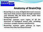 anatomy of brainchip