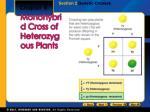 monohybrid cross of heterozygous plants