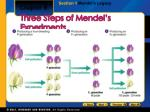 three steps of mendel s experiments