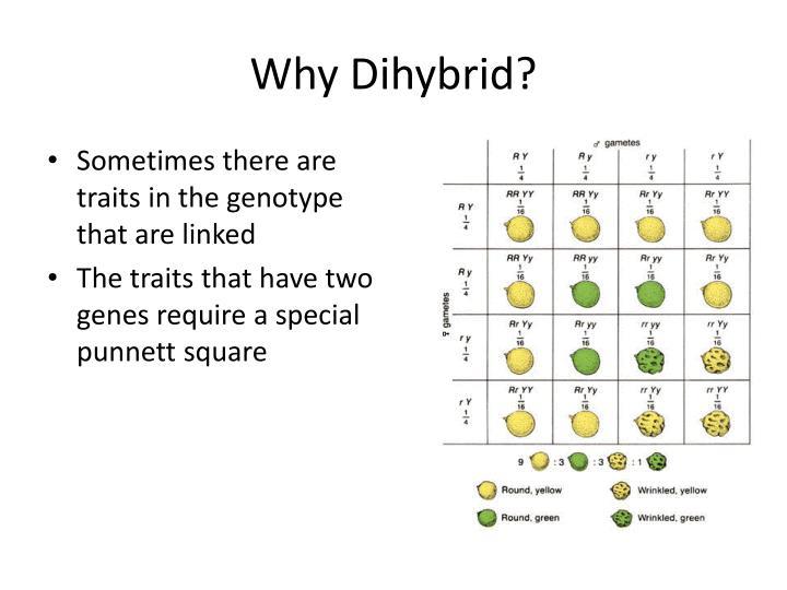 Why dihybrid