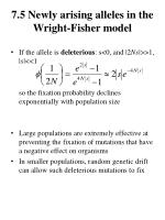 7 5 newly arising alleles in the wright fisher model2
