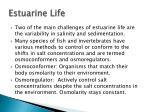 estuarine life