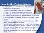 muscle 4 pectoralis major1