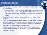 pectoralis major1