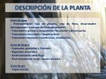 descripci n de la planta2