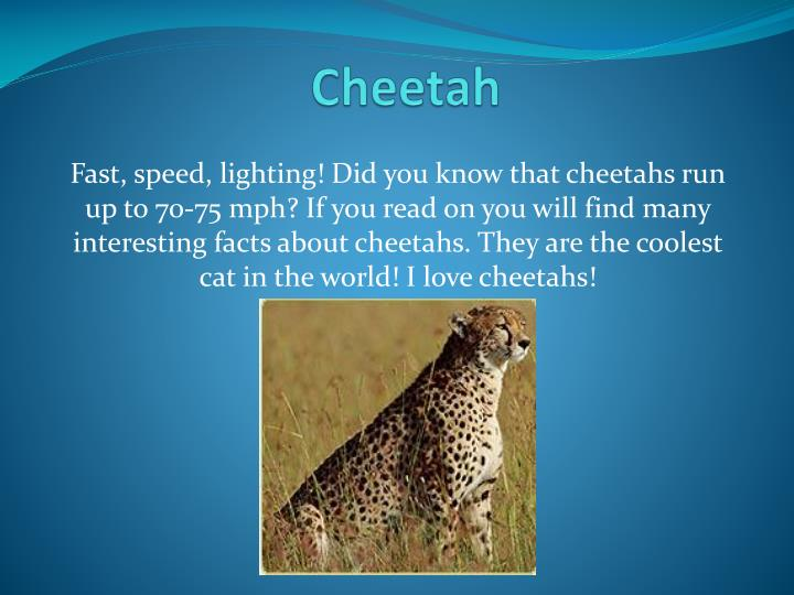 PPT - Cheetah PowerPoint Presentation - ID:2226890