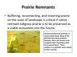 prairie remnants3