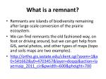 what is a remnant1