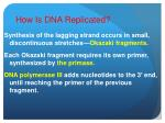 how is dna replicated10
