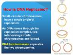 how is dna replicated12