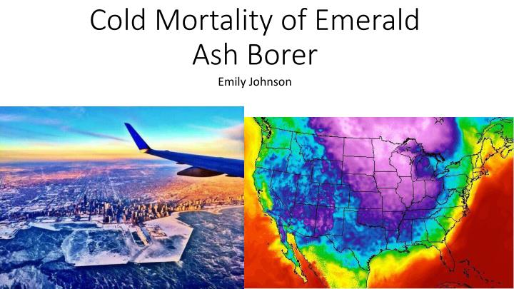 cold mortality of emerald ash borer n.