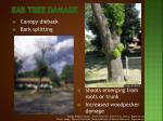 eab tree damage1