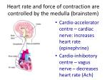 heart rate and force of contraction are controlled by the medulla brainstem