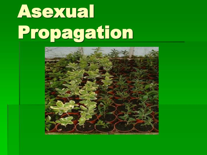 asexual propagation done by my prof This publication is also used as class material for students in the course of asexual propagation in the agriculture prof pagán also expressed his best.