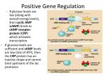 positive gene regulation1
