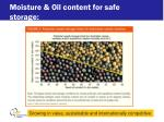 moisture oil content for safe storage