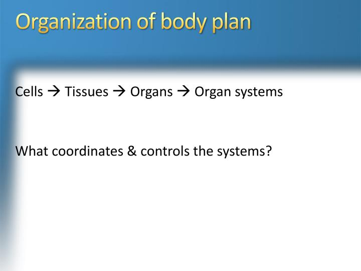 Organization of body plan