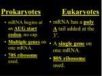 prokaryotes eukaryotes1