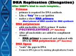 dna replication elongation