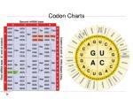 codon charts