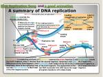dna replication song and a good animation