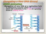 elongating a new dna strand hhmi animation