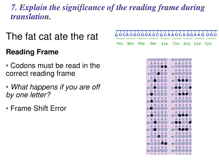 7. Explain the significance of the reading frame during translation.