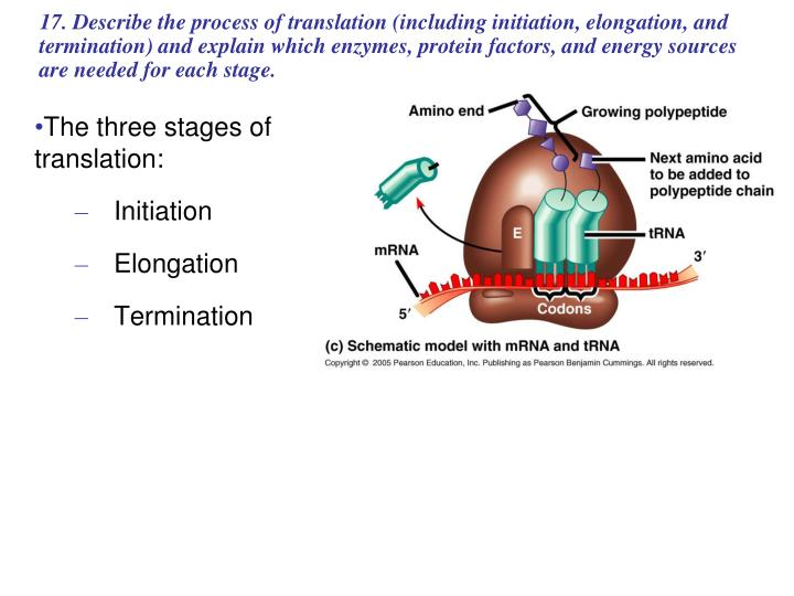 The three stages of translation: