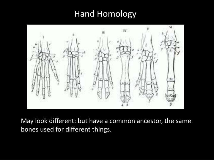 Hand Homology