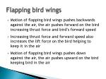 flapping bird wings