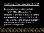 building new strands of dna1