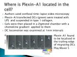 where is plexin a1 located in the cell