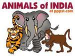 animals of i ndia