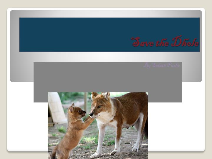 save the dhole n.