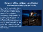 dangers of living near lion habitat when people and lions collide both suffer
