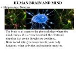 human brain and mind