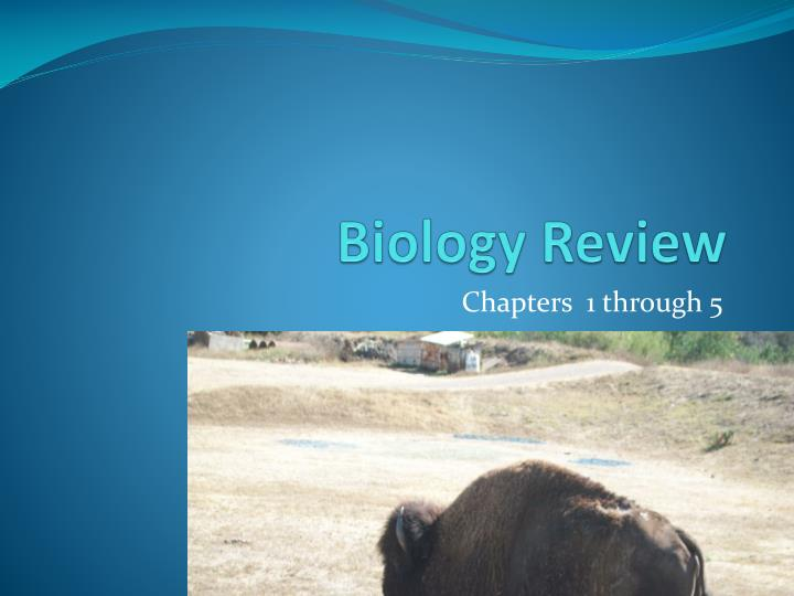 biology review n.