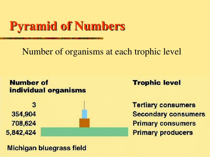 Pyramid of Numbers