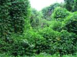 zonele naturale