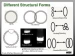 different structural forms