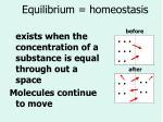 equilibrium homeostasis