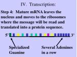 iv transcription7