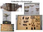 collection d entomologie