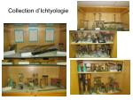 collection d ichtyologie